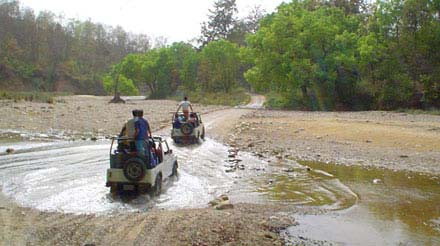 Best Time To Visit Corbett National Park